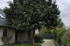 træ-før-c
